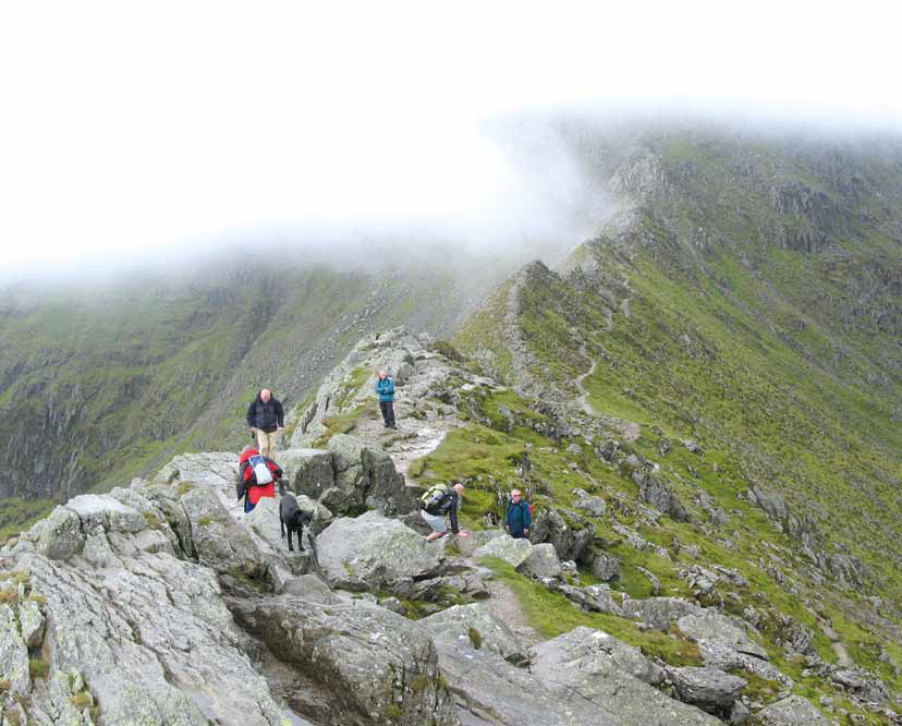 Image for article FOUR PAWS ON STRIDING EDGE