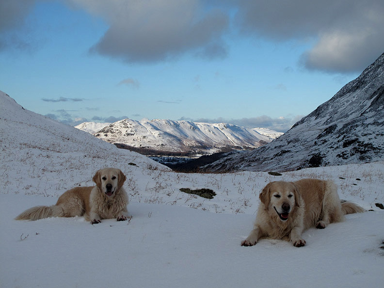 Image for article PAW-FECT WINTER SAFETY