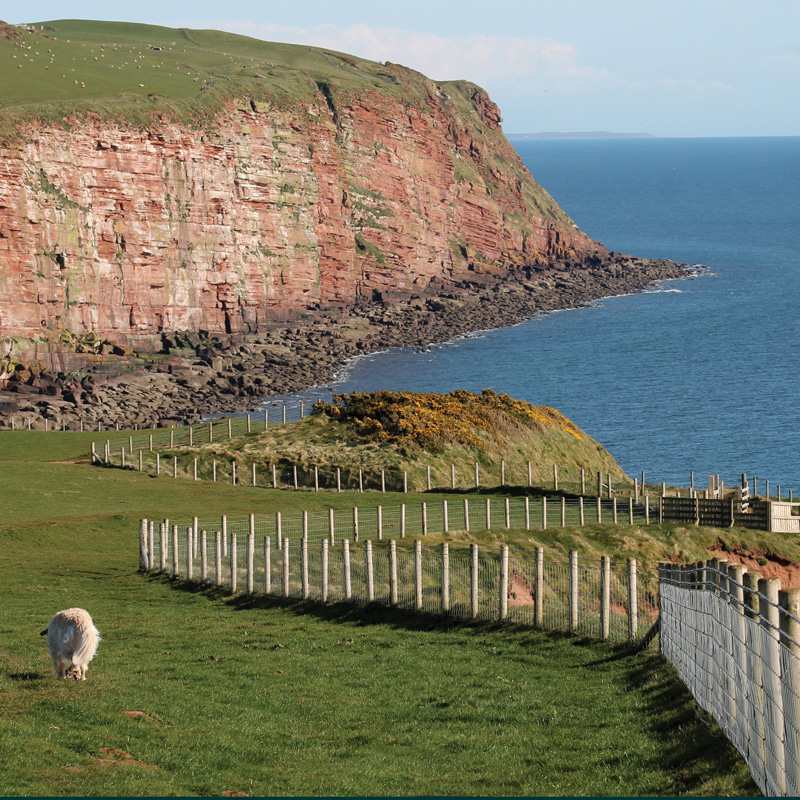Image for article THIS MONTH'S WALK: ST BEES AND ITS LIGHTHOUSE