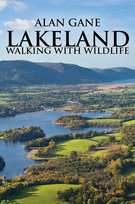Image for article LAKELAND – WALKING WITH WILDLIFE