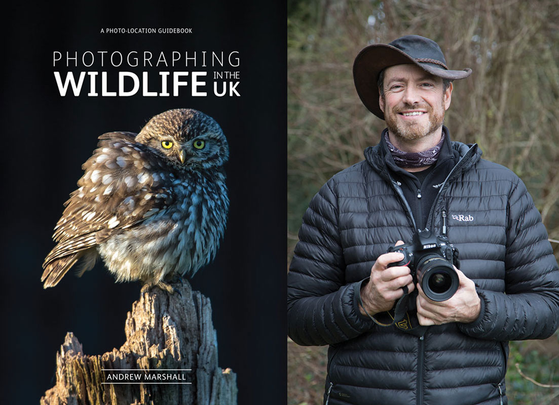 Image for article Photographing Wildlife in the UK